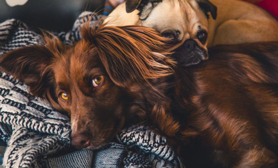 10 Surprising Benefits from Having a Pet at Home
